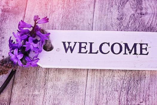 Willkommen-Schild mit Hyazinthe